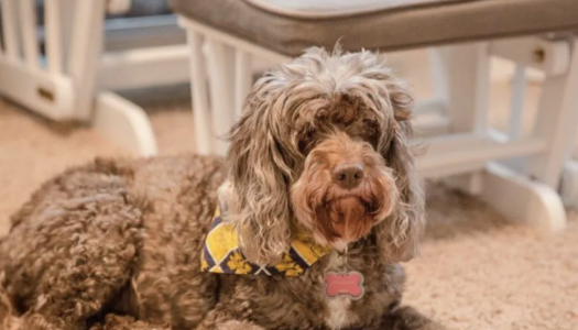 Working from home, AT&T employees share #LifeAtATT with their furry coworkers